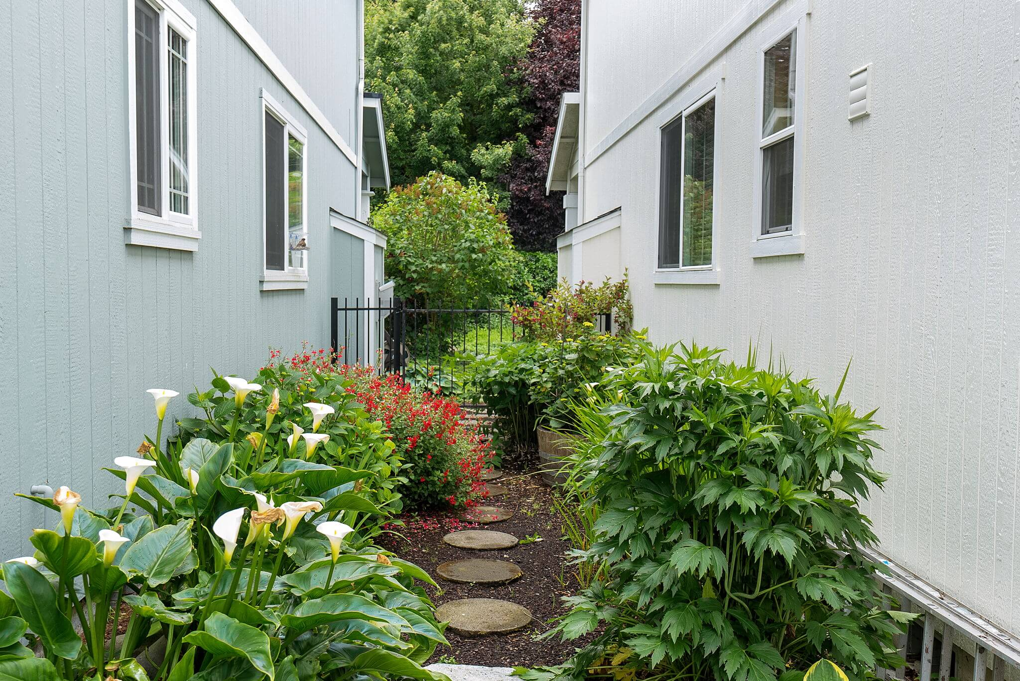 Shared garden space on the south side of the house